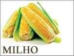 Colheita de milho no centro-sul do Brasil alcança 25% do total!