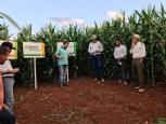 Dia de Campo sobre Biotecnologia e Manejo de Pragas e Doenças na cultura do Milho