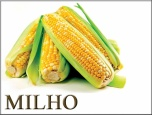 Milho: Focado no clima no Meio-Oeste, mercado inicia a semana com ligeiras desvalorizações na Bolsa de Chicago